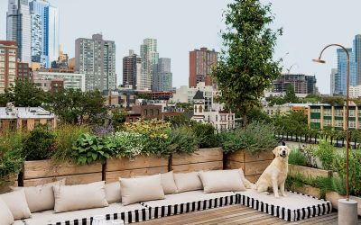 Transform Your Rooftop With These Doable DIYs